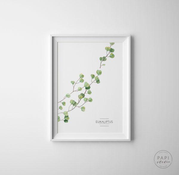 akwarela eukaliptus nowoczesny plakat